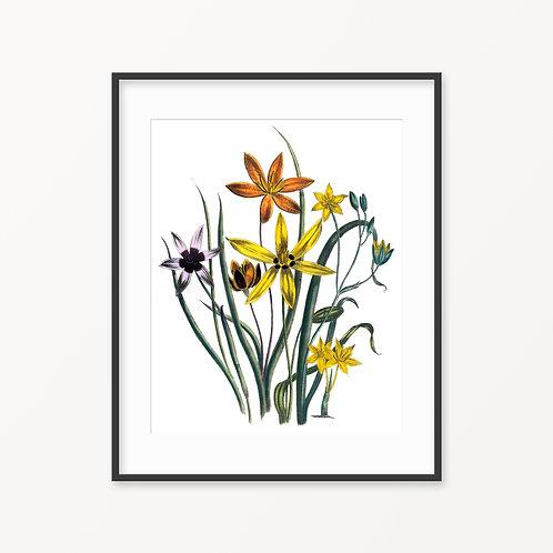 Vintage Botanical Print - 25