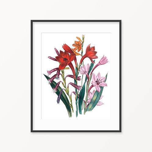 Vintage Botanical Print - 9