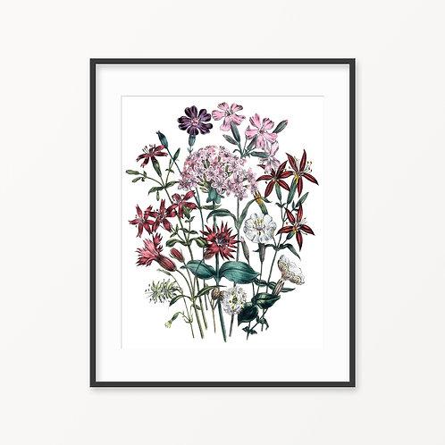 Vintage Botanical Print - 125