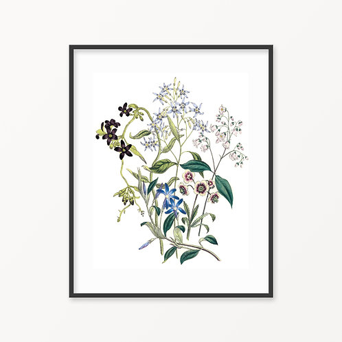 Vintage Botanical Print - 165