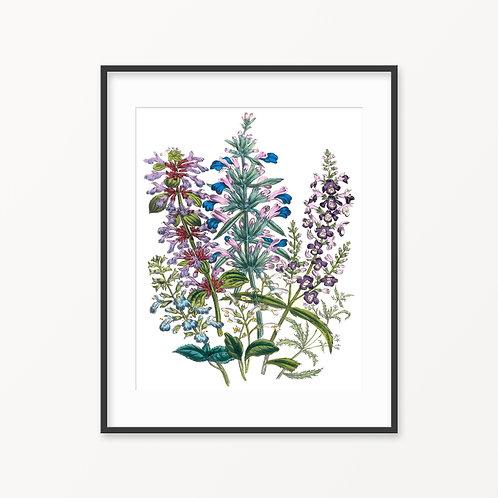 Vintage Botanical Print - 92