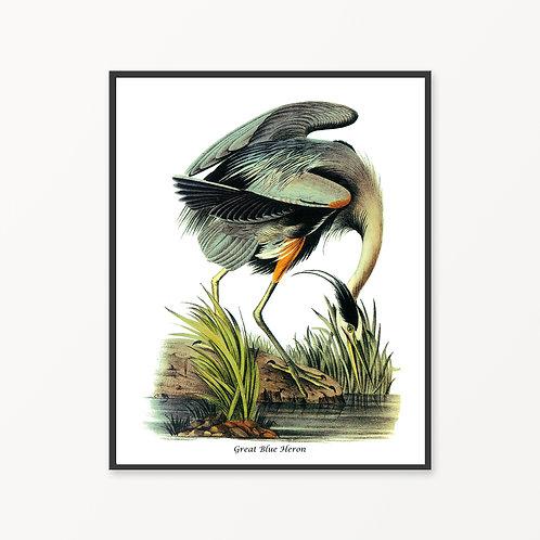 Great Blue Heron Hand Drawn illustration