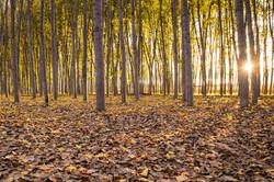 Entre los troncos