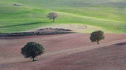 Campos andaluces