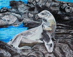 """Jeff the Sea Lion"""