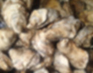 Oysters%20in%20the%20water_edited_edited