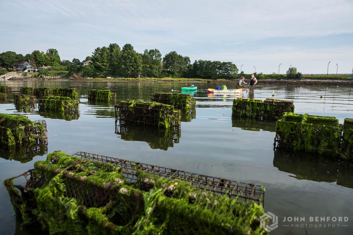 Fox Point Oyster Farm Tour