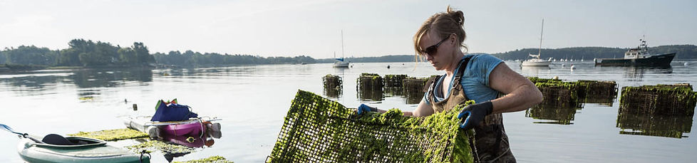 oyster farming, Laura Brown owner Fox Point Oysters, NH oysters, NH oyster farm, aquaculture