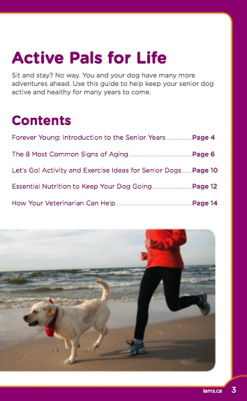 Iams Senior Dog Guide