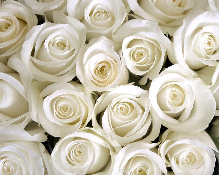 012618-white-roses2-2000.jpg