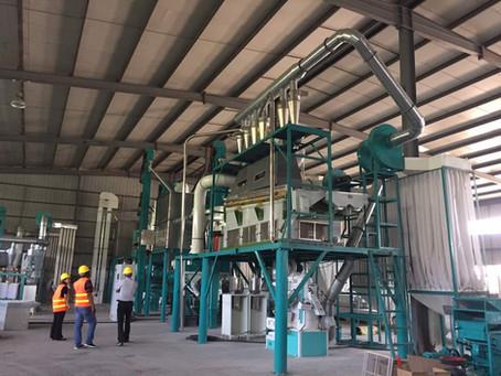 Allez au Kenya pour les machines à fraiser le maïs et les machines à fraiser la farine de blé