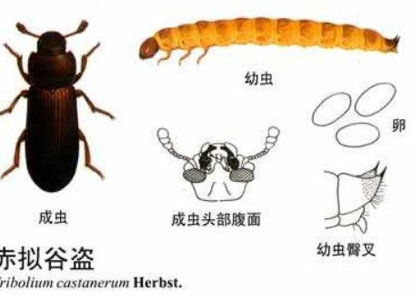 Quelques mesures de prévention et de contrôle des parasites dans les usines de farine
