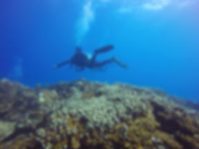 Discover beautiful reefs in Vieques