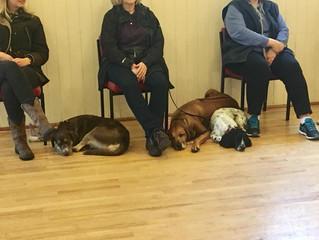Dog tired!