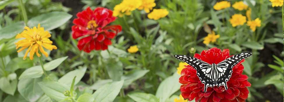 02_butterfly.jpg