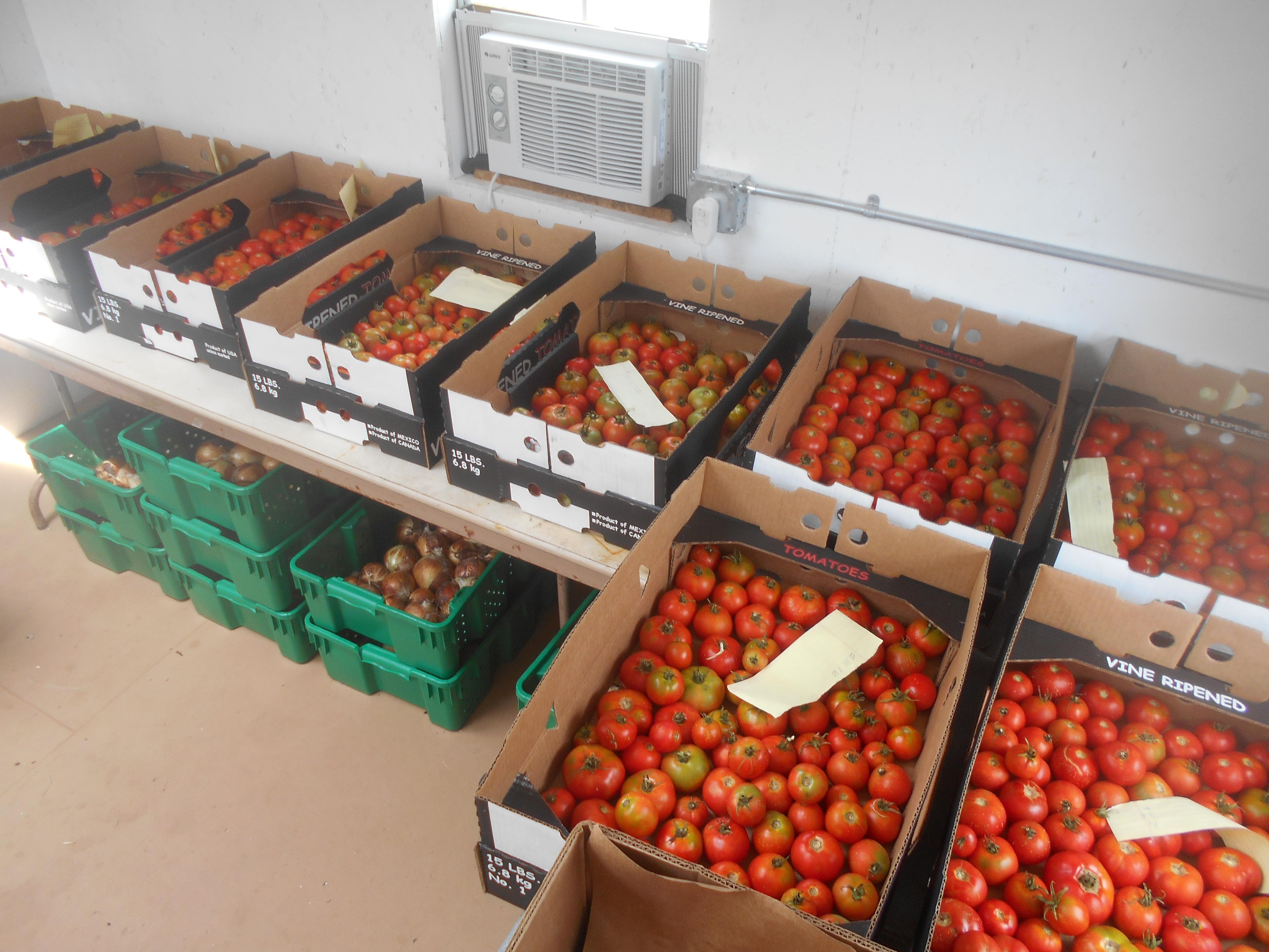 tomatoepacking72217