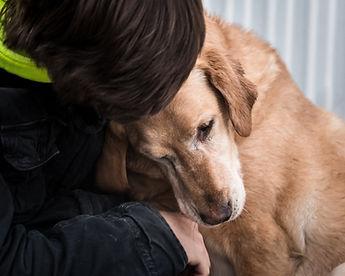 Mat-Su Animal Shelter   Lost Pets   Palmer, AK