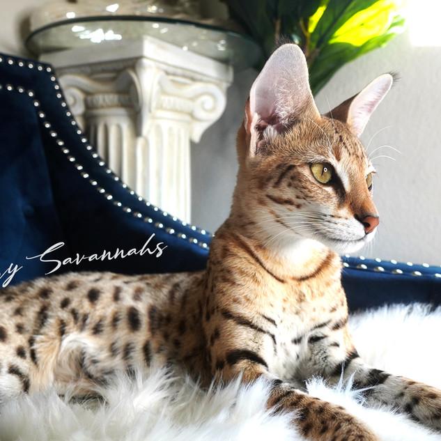 Luxury Savannahs