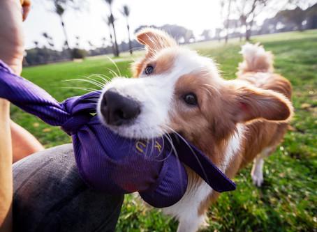 Als spelen met je hond niet vanzelf gaat
