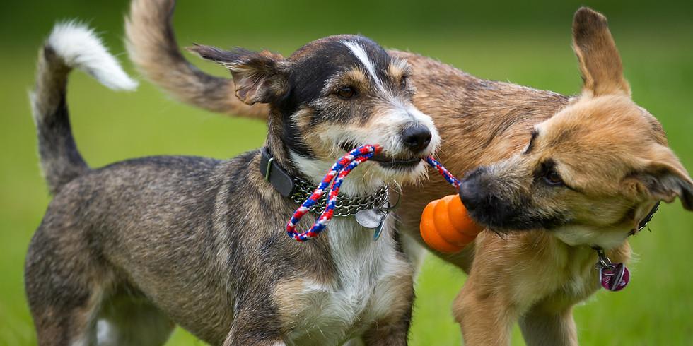 Workshop: spelen met andere honden