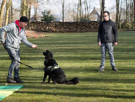 Waarom een hondenschool voor adoptiehonden uit het buitenland?