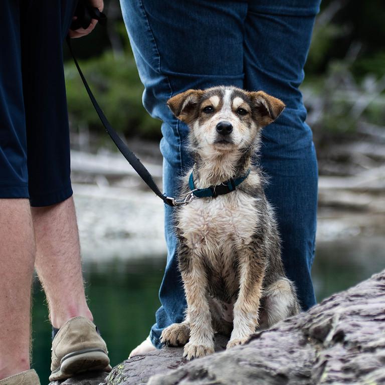 Webinar: de eerste weken met je adoptiehond