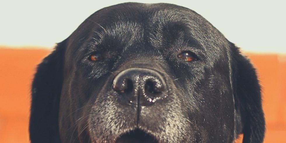 Wat moet ik doen als mijn hond ergens niet langs durft?