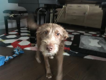 Een kersverse adoptiehond in huis? Neem een maand vrij!
