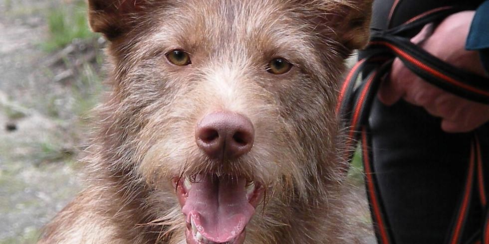 Zomercursus: zet je hond in zijn kracht!