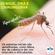 Conheça os sintomas inicias da Dengue, Zika e Chikungunya