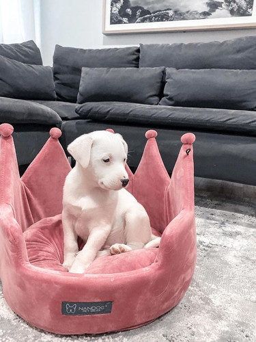 another pup OP.jpg