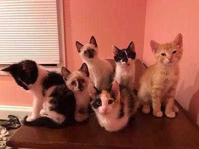 Kitten crew.jpg