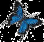 ButterFlyTransparent02.png