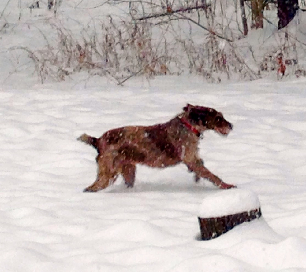 picture of dog running through the snow