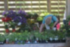 Plant Sale- Small.jpg
