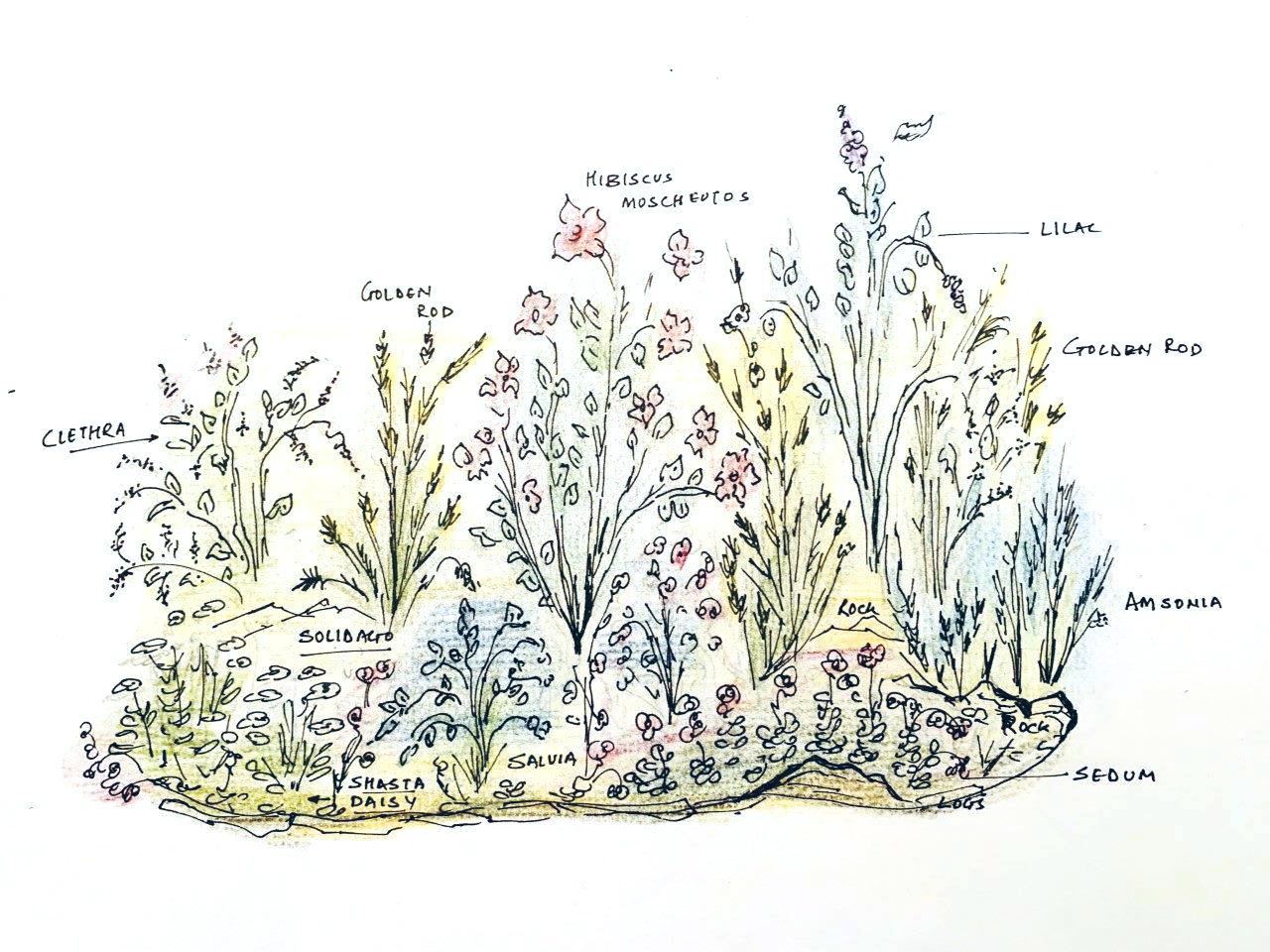 Design a Pollinator Garden