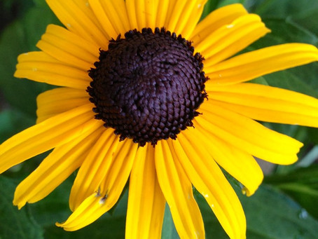 Botanist's Lens: You See Yellow, They See UV!