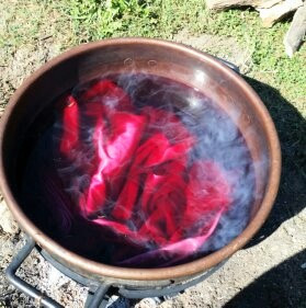 Cochineal dye in pot