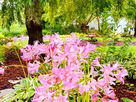 Botanist's Lens: Summer Pinks