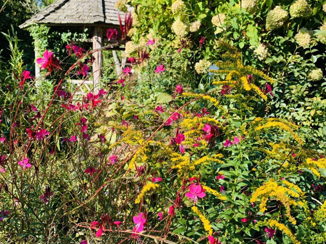 Botanist's Lens: Transient Veils of a Four Seasons Garden