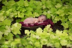 Baby in gardens