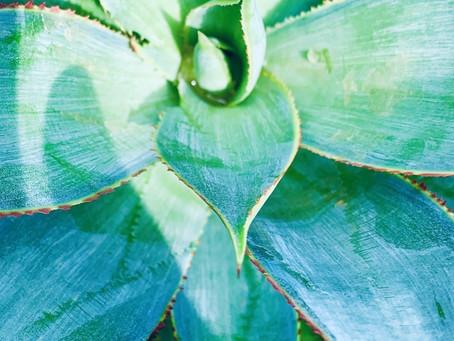 Botanist's Lens: Soaking in the Sun!