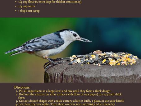 Earth Day Activity: Bird Seed Cookies!