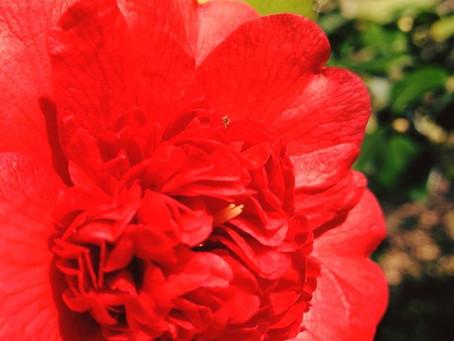 Botanist's Lens: Spring Sanctuary