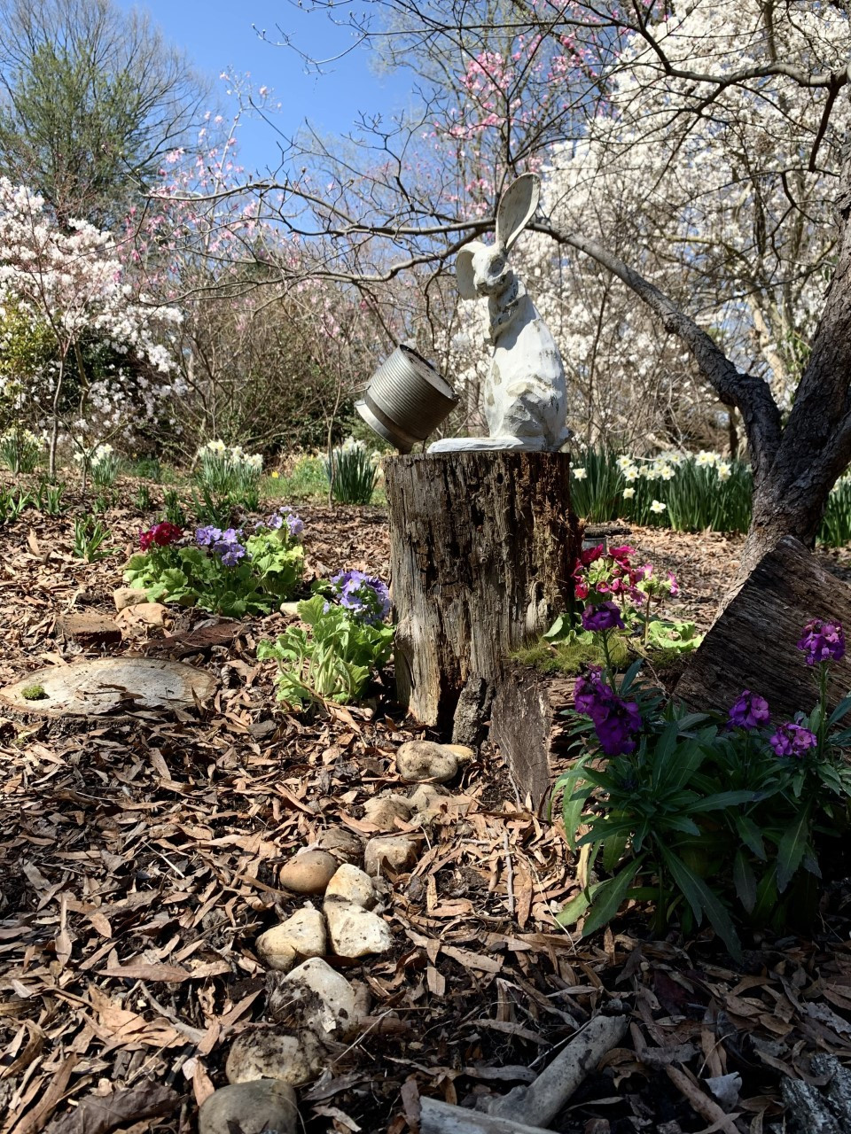 A statue of a bunny on a stump under a Magnolia and Cherry blossom trees in the spring walk.