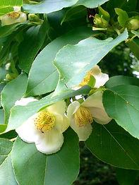 Flower 03.jpg