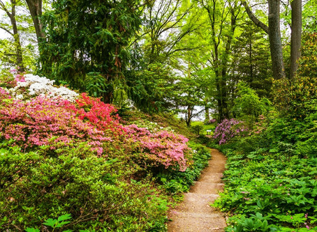 Compatible Companions: Rhododendrons and Elevations