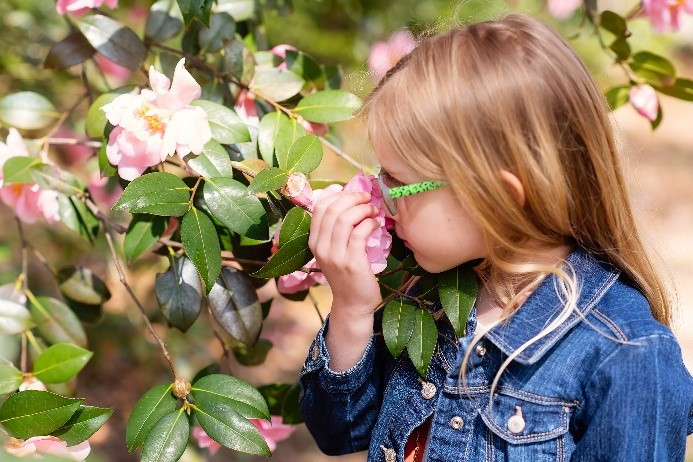 Girl with Camellias by Jess Lombardi.jpg