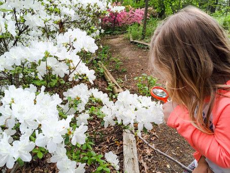 Family Fun: Citizen Science Month