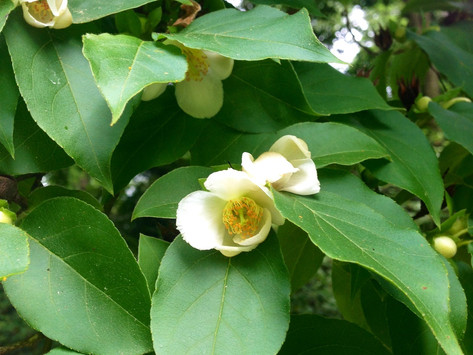 Botanist's Lens: Good Time to Be on the Move in the Garden!